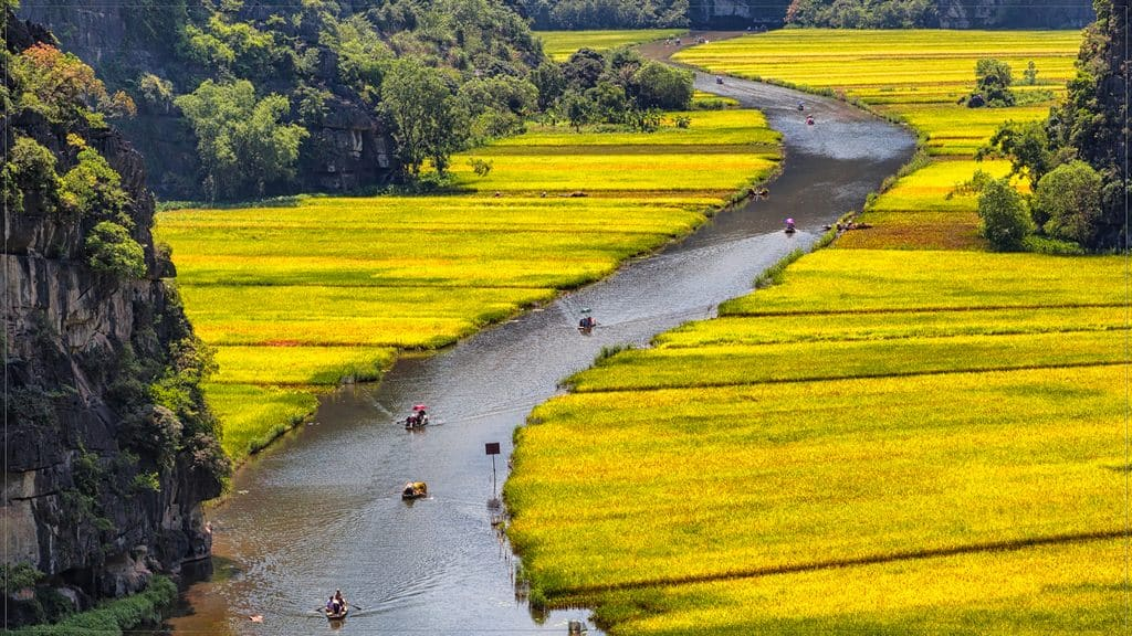 Tam Coc boat trip in the golden rice season