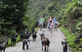 Làng Việt Hải, đảo Cát Bà